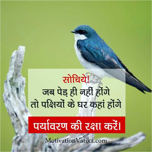 save birds quotes in hindi image